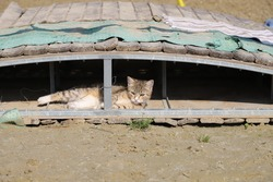 Charming tabby kitten resting under the training bridge in a riding school