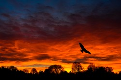charming twilight photos with orange and flying birds