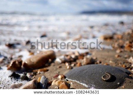 Charmouth, Dorset. Part of the English Jurassic Coast. Fossils are easily found on the beach including those of ancient ammonites from the Lower Jurassic period, around 195 million years old. #1082443631