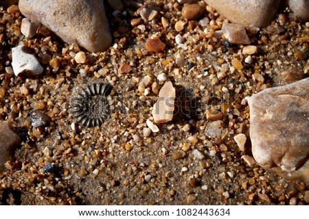 Charmouth, Dorset. Part of the English Jurassic Coast. Fossils are easily found on the beach including those of ancient ammonites from the Lower Jurassic period, around 195 million years old. #1082443634