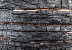 Charred texture of burnt wood