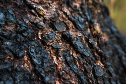 Charred tree in the forest. Autumn time. Burnt bark.