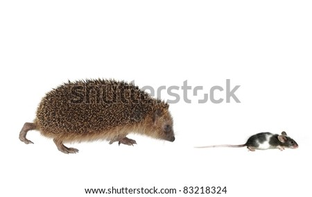 chasing mouse hedgehog on white background