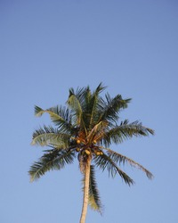 Chasing palm trees in midigama Sri Lanka perfect iPhone wallpaper