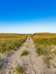 Chatham beach pathway with sea grass.