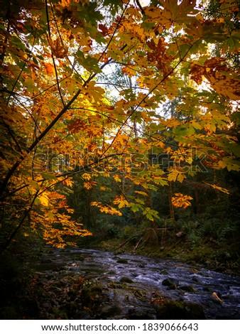 Chatter's River Fall Scenic Area 02, Sooke Stock fotó ©