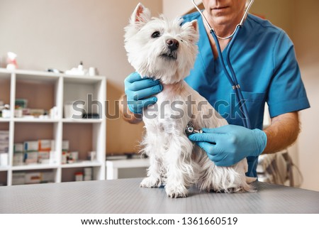 Checking the breath. Male veterinarian in work uniform listening to the breath of a small dog with a phonendoscope in veterinary clinic. Pet care concept Foto stock ©