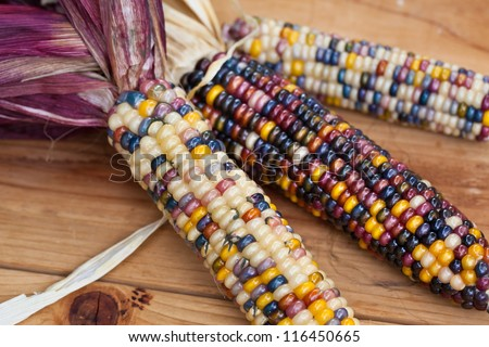 Cheerful and Colorful dried Indian Corn on wooden surface  as decoration for Thanksgiving Table, Halloween, and the Fall Season