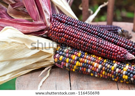 Cheerful and Colorful dried Indian Corn on wooden surface  as decoration for Thanksgiving Table, Halloween, and the Fall Season. Also available in vertical format.