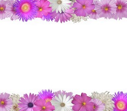 Cheerful  border of pink and white flowers top and bottom