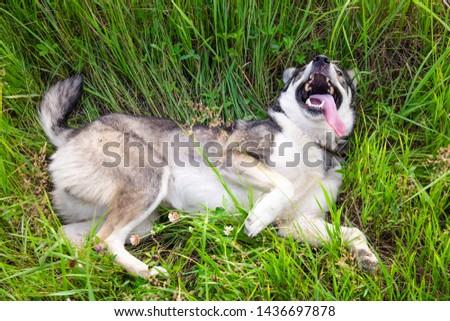 cheerful cheerful dog lying among the green grass