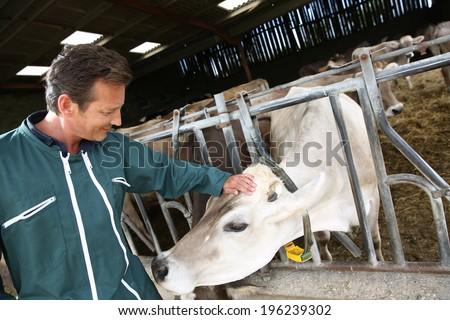 Cheerful farmer petting cow in barn