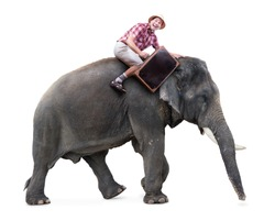 Cheerful tourist with suitcase sits on an elephant. The traveler ride on an elephant isolated on white background. An adventure on a tropical vacation.