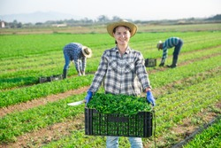 Cheerful young adult woman farmer carrying crate with picked arugula on field, proud of good quality of harvest