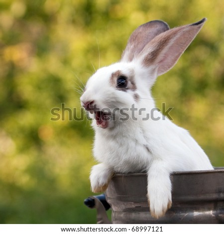 Cheery bunny sitting in a tank with natural background.