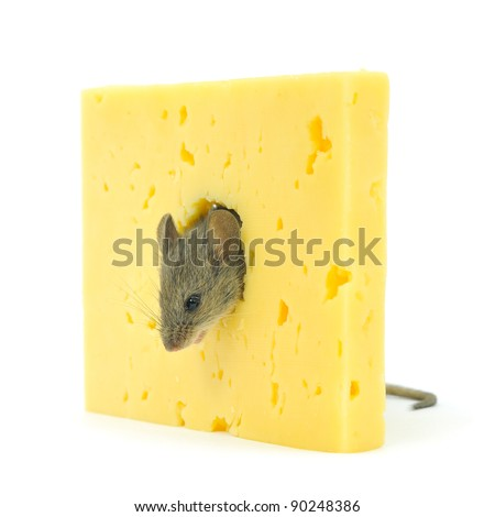 Cheese and grey mouse isolated on white.