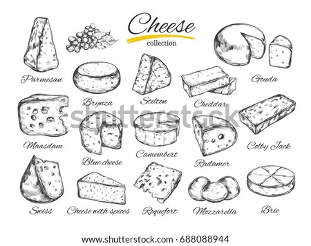 Cheese collection. Hand drawn  illustration of cheese types . Isolated on white
