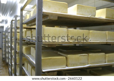 cheese in cold storage in modern dairy