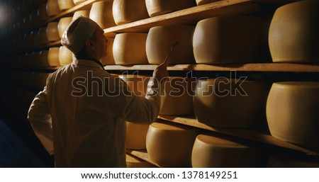 Cheesemaker is controlling the seasoning lots of wheels of parmesan cheese are maturing by ancient Italian tradition for many months on shelves of a storehouse in a dairy factory.