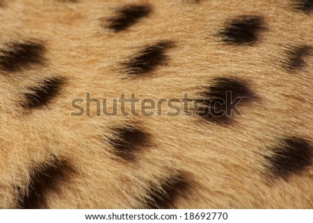 hockey wallpaper border. Cheetah+wallpaper+order