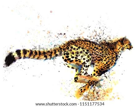 cheetah hand drawn watercolor illustration