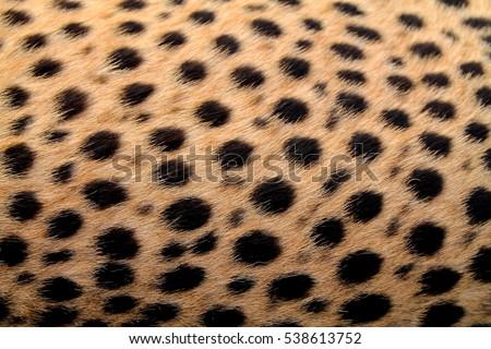 Cheetah just woke up