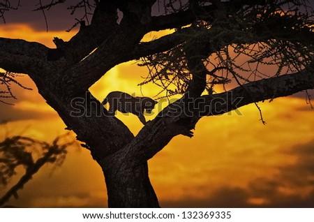 cheetah, sunset, silhouette - stock photo