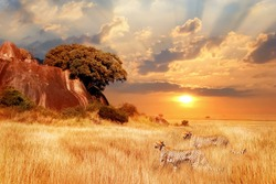 Cheetahs in the African savanna against the backdrop of beautiful sunset. Tanzania. Africa.
