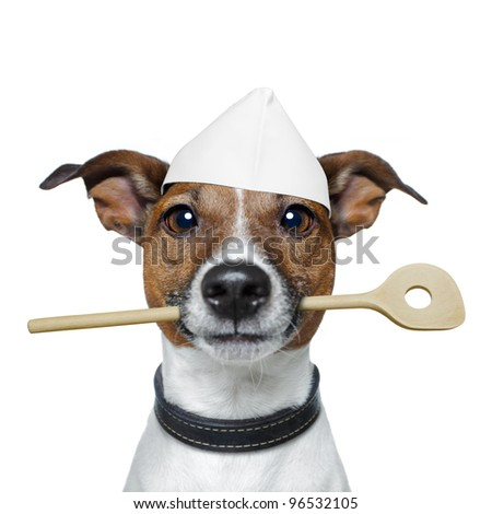 chef dog with cooking  spoon - stock photo