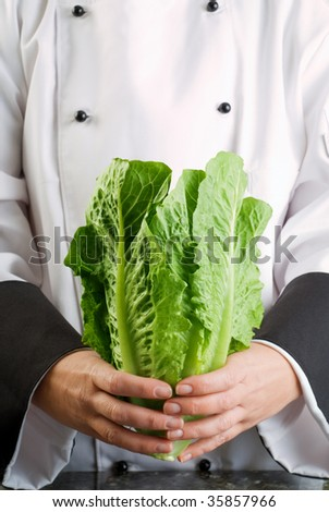 Chef Wearing Black and White Uniform Holding Fresh Cos Lettuce