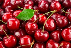 Cherries. Cherry background. Fruit background. Wet cherry with leaves and drops.