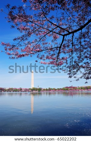 Cherry blossom and Washington monument over lake, Washington DC.