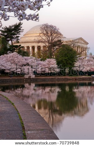 Cherry blossom around Tidal Basin with Jefferson Memorial, Washington DC