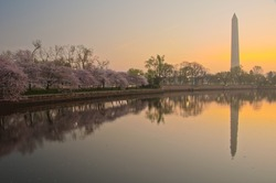 Cherry Blossom Festival at the National Mall. Washington, DC