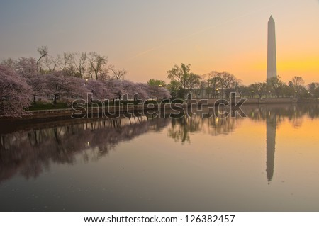 Cherry Blossom Festival at the National Mall. Washington, DC