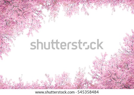 Cherry blossom frame use as background
