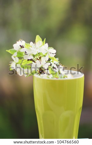 cherry blossom in a vase