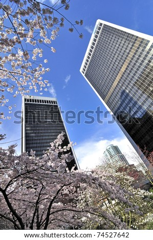 Cherry blossom in Downtown Vancouver