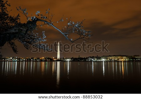 Cherry blossom in Washington DC at night