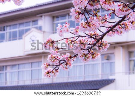Cherry blossom (Sakura) and school building. ストックフォト ©