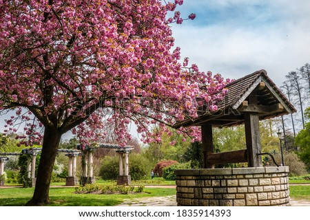 cherry blossom season in France lyon  france, walks in Lyon in the spring, the beauty of the Parc de la Tête d'Or Sakura tree in blossom. cherries are in bloom, Springtime, Parc Photo stock ©
