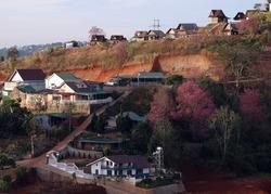 Cherry blossom season on Dalat mountain town.