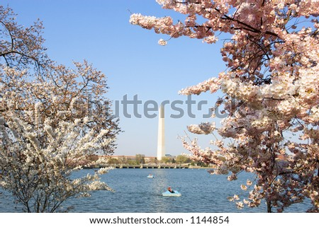 Cherry blossom trees blooming around the Tidal Basin in Washington, DC, USA.