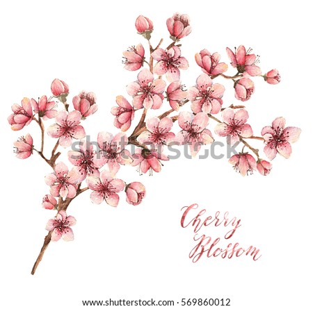 Stock Photo Cherry blossom, watercolor illustration,spring flowers, flowers,card for you,different elements,handmade