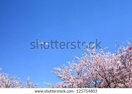 Cherry blossom with airplane