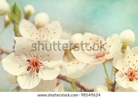 Cherry blossoms against  a blue sky #98549624
