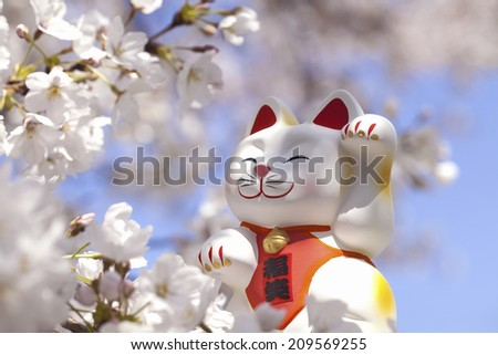 Cherry Blossoms And The Beckoning Cat Raising Its Left Hand