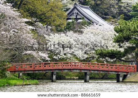 cherry blossoms at Japanese garden in Yokohama City, Japan.