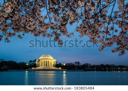 Cherry blossoms at the Jefferson Memorial before sunrise