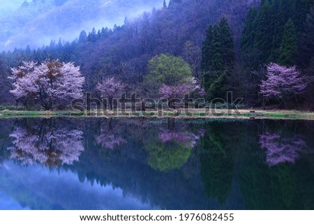 Cherry blossoms blooming on the shores of Lake, Iwate Prefecture Stock photo ©
